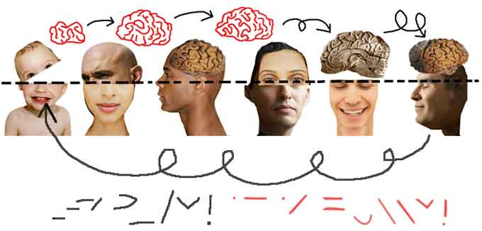 Cambio de cerebro